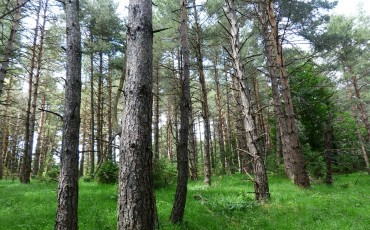 pine-forest-167504_960_720