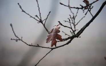 winter-288666_960_720
