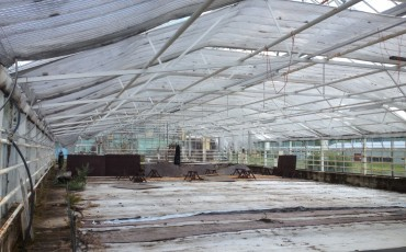 deserted-greenhouse