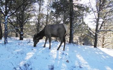 reindeer-in-the-snow-1451003850u4J