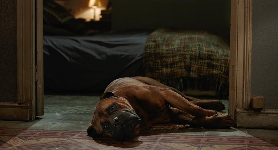 20 - Troilo - TRUMAN (fotograma de la película)