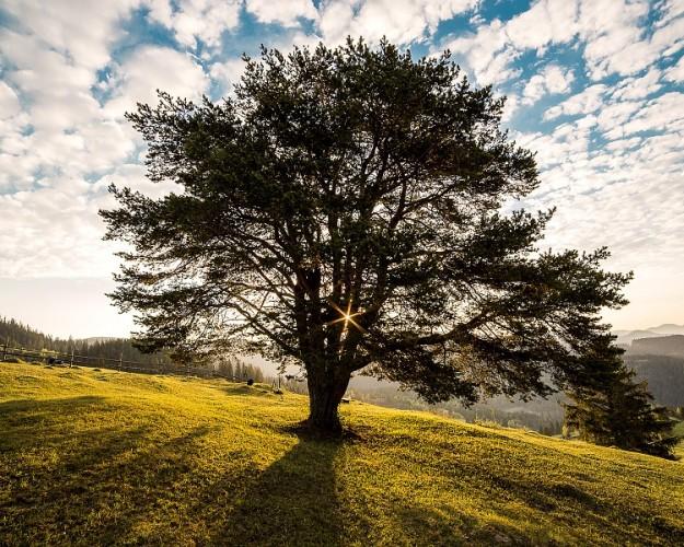 tree-338211_960_720
